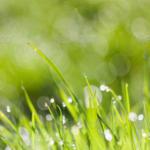 morning dew - photodune